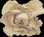 creme_rose_dried2.png