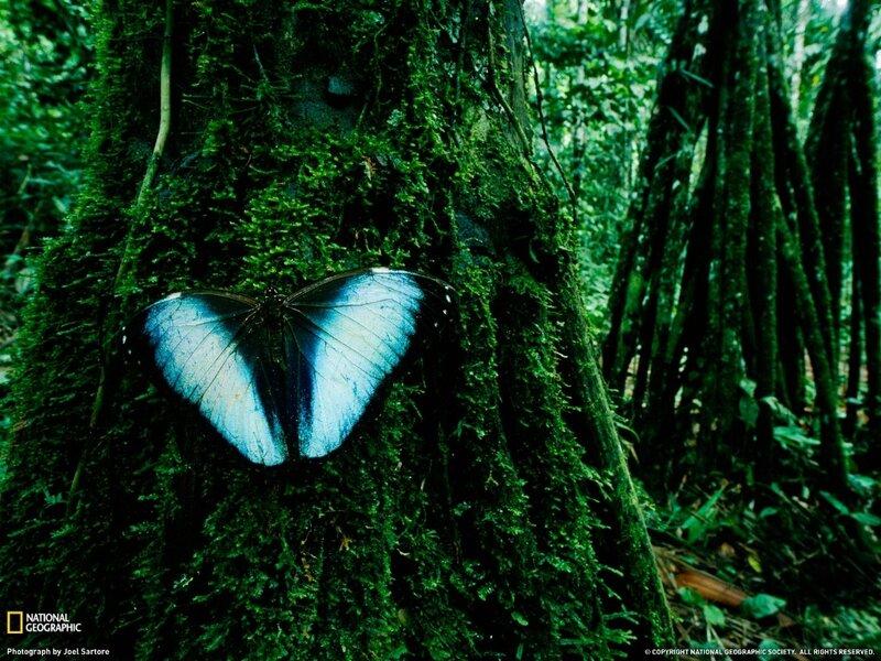 Фотографии общества National Geographic 7