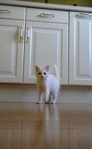 котенок, мебель