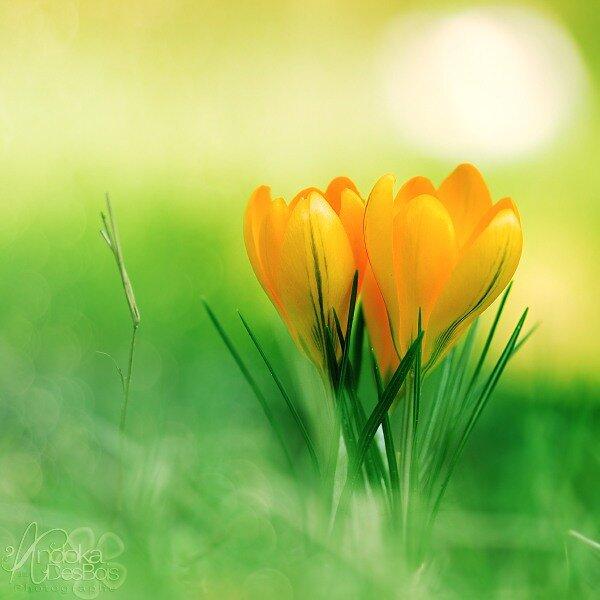 картинки для авы ватсап весна надо так, чтобы
