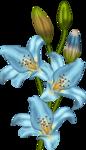 «lrbunnyhope»  0_56c83_1156529f_S