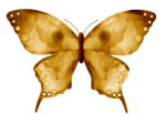 «DBV Gold Rush» 0_58b42_c35a594f_S