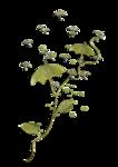 «Скрап -набор Мой сад» 0_5e132_6cb1aab0_S