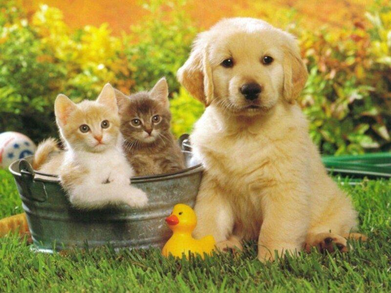 Кошки  0_5294b_54aff65c_XL