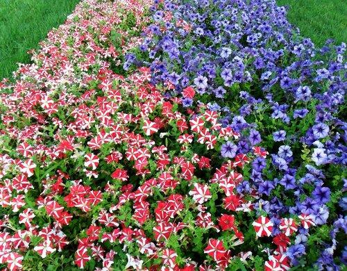 Цветы..