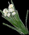 Домашние цветы 51