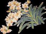 Орхидеи 19