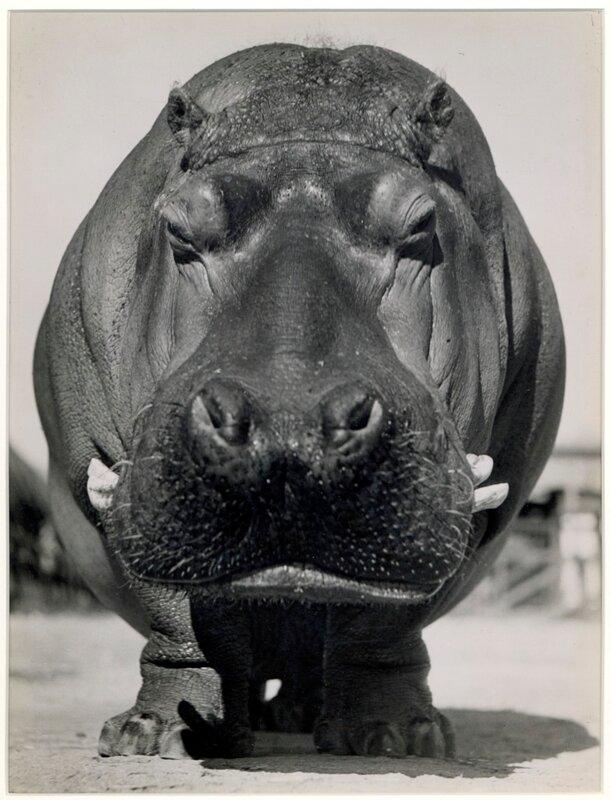 by Bob Wallace, 1937