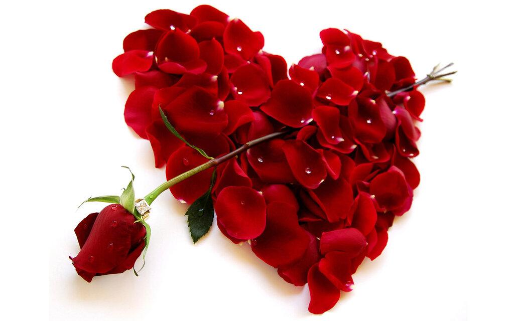 картинки розы я люблю тебя так сильно ужгорода других