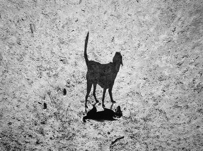 Mondo cane, Thomas Roma_1280.jpg