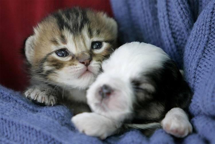 Картинки милых котят и щенят самых милых