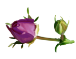 Purple charm_YalanaDesign (17).png
