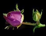 Purple charm_YalanaDesign (18).png
