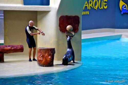морские котики, лоро парк
