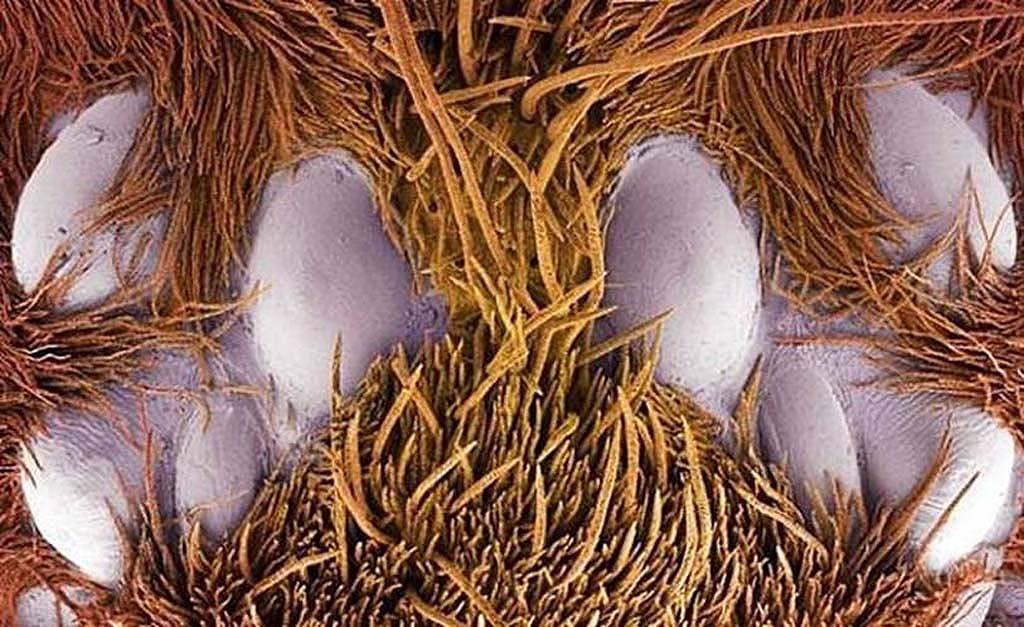 15-udivitelnyx-sozdanij-kotoryx-ne-razglyadet-bez-mikroskopa-15-foto