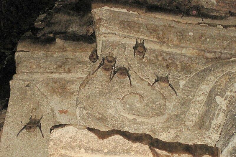 Летучие мыши на потолке ступы (чеди) храмового комплекса Wat Phra Si Sanphet в древней столице Сиама Аюттайе, Таиланд