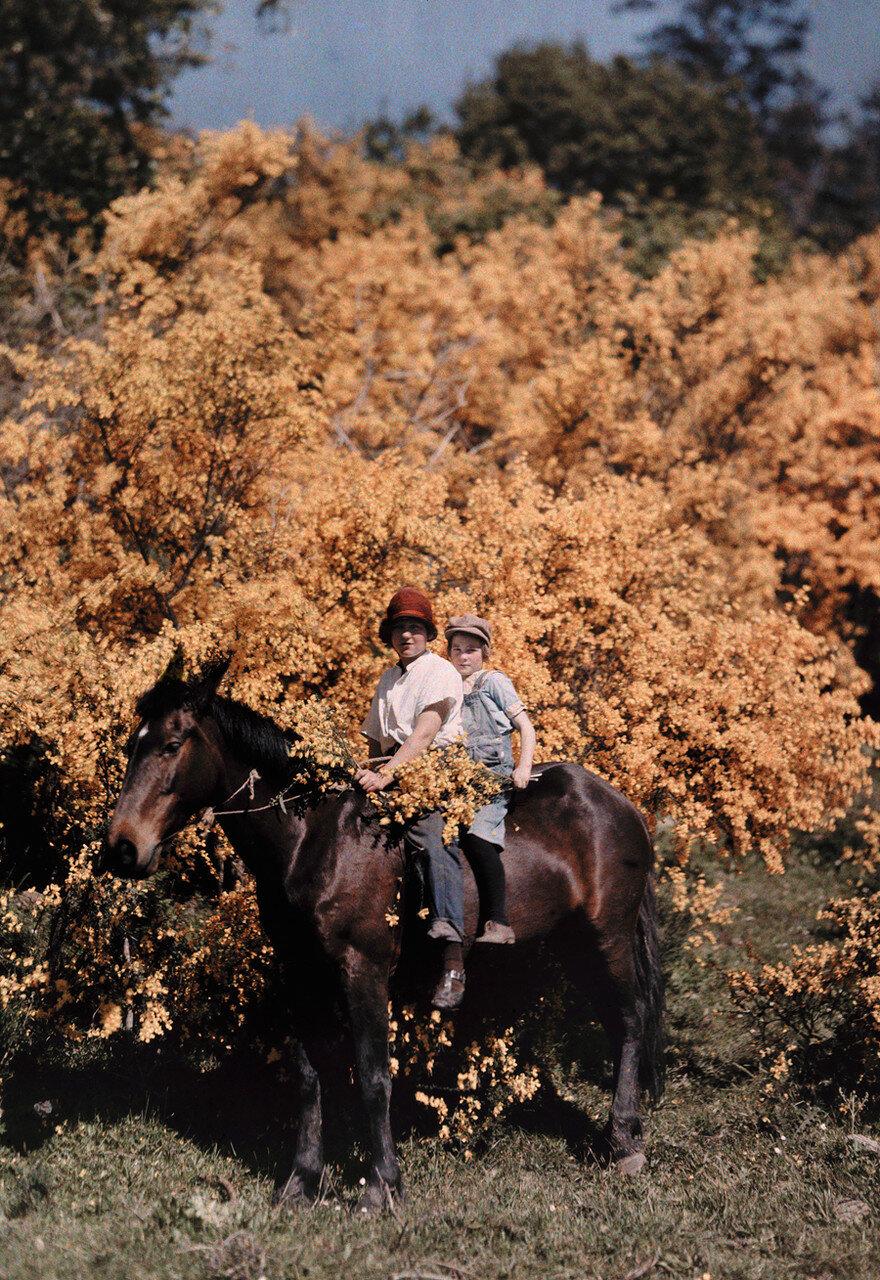 1929. США. Дети на лошади сидят на лошади в Кресент-Сити, Калифорния