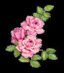 rosenrosa013.png