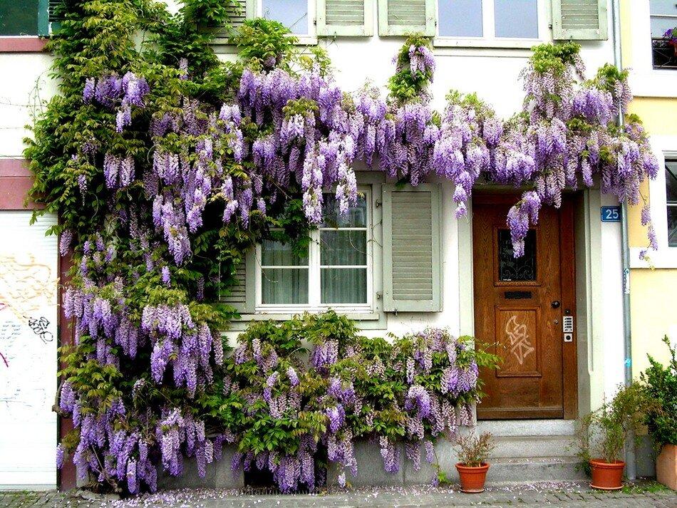 Магазин цветов глициния, цветов купить