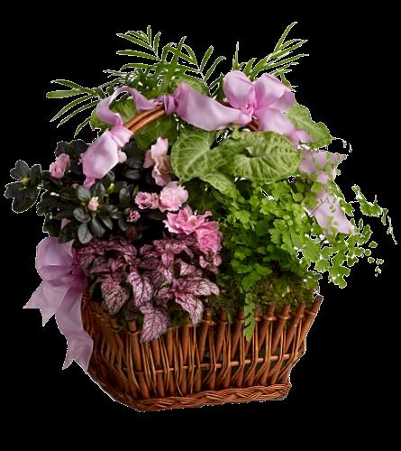 Tubes vases page 7 for Fleur pas chere a planter