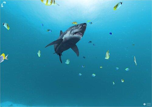 Настоящая живая акула