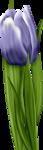 «lrbunnyhope»  0_56c1e_72c7f057_S