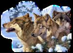 Лиса,волк  0_5091b_37af1034_S