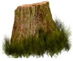 tree trunk64.png