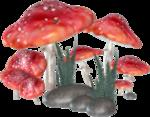 WishingonaStarr_FTLOC_Mushrooms.png