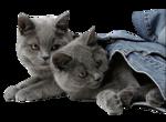 Кошки 5 0_50a12_57ce39de_S