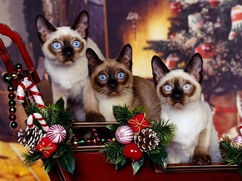 Кошки  0_5293a_5fd8254a_XL