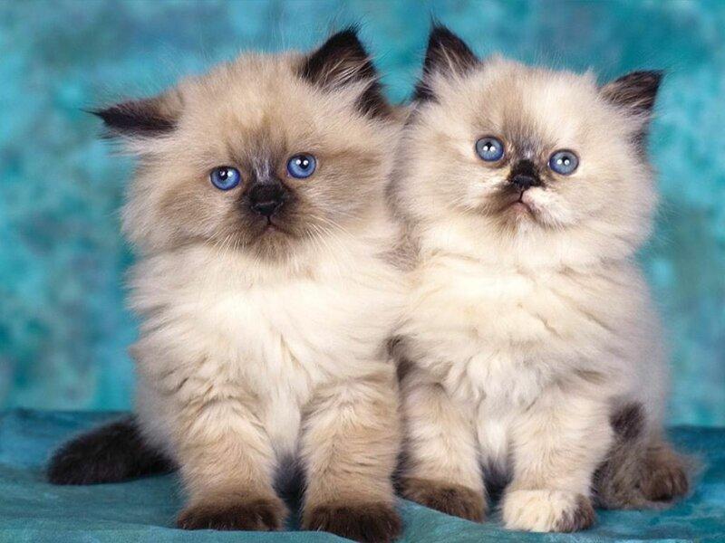 Кошки  0_52942_fc3b7620_XL