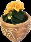 Домашние цветы 56