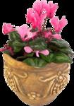 Домашние цветы 59