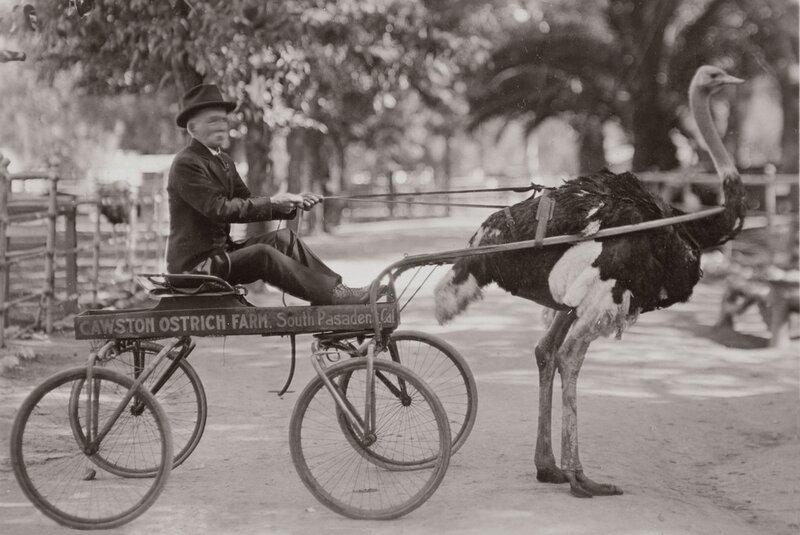 riding on an ostrich