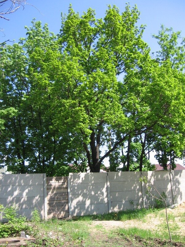 Дендропарк. Луганск