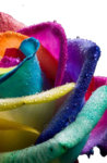 colorful_flowers_02.png