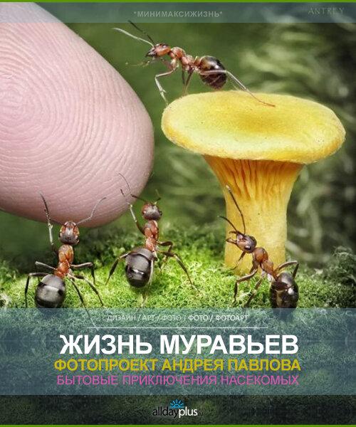 Минимир для муравьев. Макро-фотопроект Андрея Павлова. 30 занимательных фото.