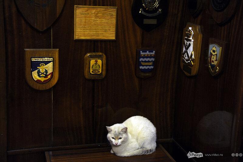 """Эскадренный миноносец """"Беспокойный"""". Эсминец Балтийского флота."""