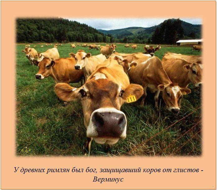 http://img-fotki.yandex.ru/get/5605/130422193.e8/0_76055_d7446116_orig