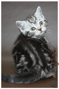 Лаптева-фото - Фотографии животных для питомников и заводчиков - Страница 4 0_12a273_4bcbf9ed_M