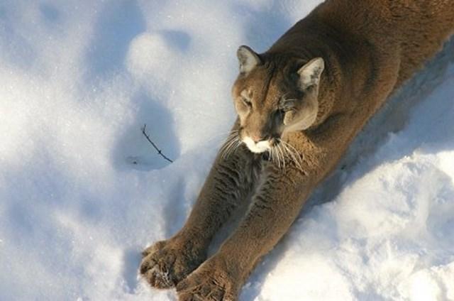 100 самых красивых зимних фотографии: пейзажи, звери и вообще 0 10f594 62f1c2f2 orig