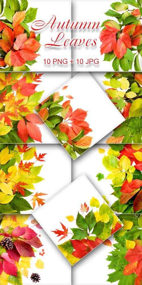 Осенние Листья / Autumn Leaves