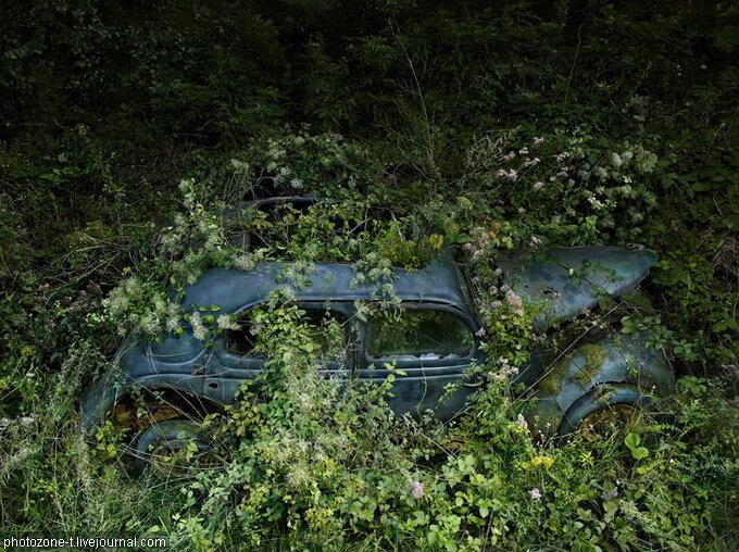 Парковка в раю  Питера Липпмана