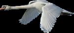 Птицы  разные  0_81ef7_3fd1db81_S