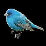 Птицы  разные  0_81f0d_960be721_S