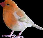 Птицы  разные  0_81f11_d3cf3c6f_S