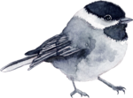 Птицы  разные  0_81f13_93677e11_S