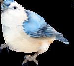 Птицы  разные  0_81f20_ba731f38_S