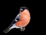 Птицы  разные  0_81f23_d9658fc9_S